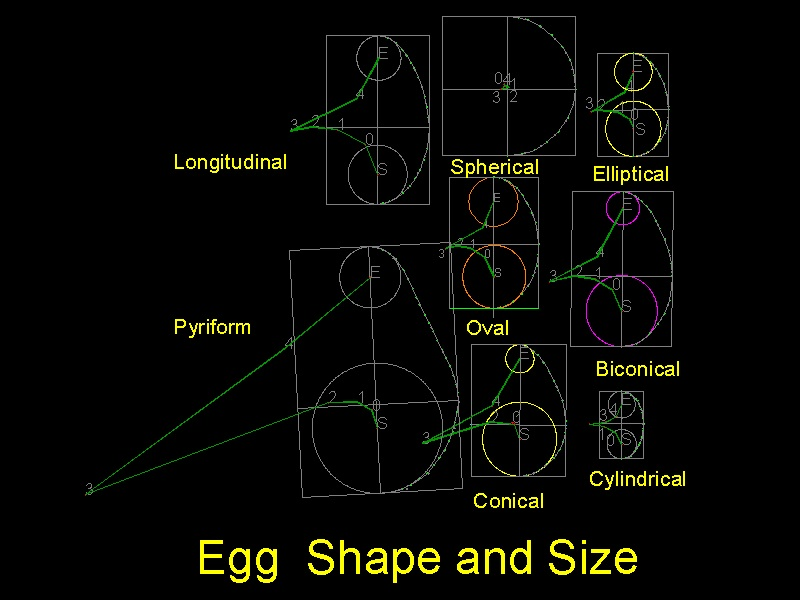download computational topology at multiple resolutions